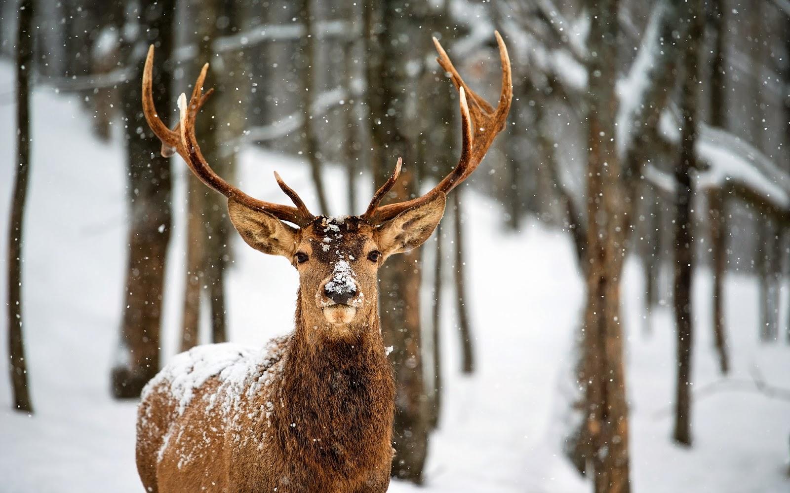 Sobreviviendo al invierno | La Última Frontera